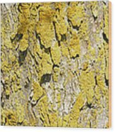 Barky View Wood Print