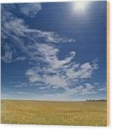 Barley Field Near Airdrie, Alberta Wood Print
