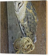 Barn Owl At Roost Wood Print