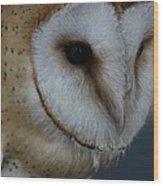 Barn Owl Closeup Wood Print