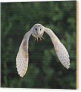 Barn Owl Flying Wood Print by Tony McLean
