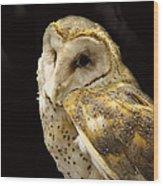 Barn Owl In A Dark Tree Wood Print