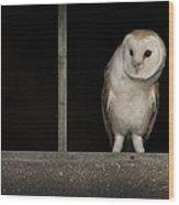 Barn Owl In Window Wood Print