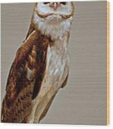 Barn Owl Of Michigan Wood Print