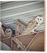 Barn Owls 1 Wood Print