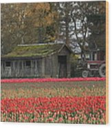 Barn Surrounded By Tulips Wood Print