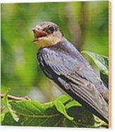 Barn Swallow In Sunlight Wood Print