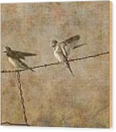 Barn Swallows On Barbed Wire Fence Wood Print