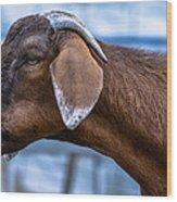 Barnyard Goat Wood Print