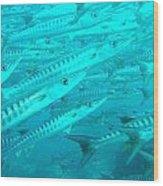 Barracuda Sipidan Borneo Wood Print
