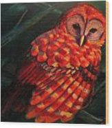 Barred Owl Wood Print