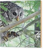 Barred Owl With Crawfish Wood Print