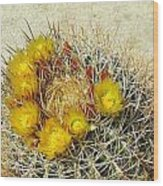 Barrel Cactus Wood Print
