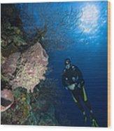 Barrel Sponge And Diver, Belize Wood Print