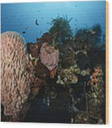 Barrel Sponge On Liberty Wreck, Bali Wood Print