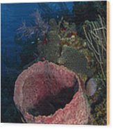 Barrel Sponge Seascape, Belize Wood Print