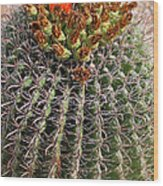 Barrell Cactus II Wood Print