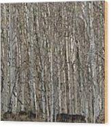 Barren Aspen Wood Print