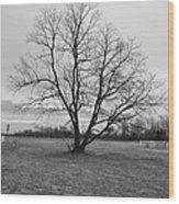 Barren Tree On A Winters Day Wood Print
