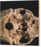 Base Of Skull 5, Sima De Los Huesos Wood Print