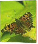 Basking Butterfly  Wood Print