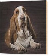 Basset Hound On A Brown Muslin Backdrop Wood Print