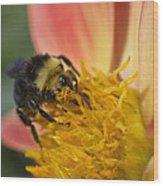 Bathing In Pollen  Wood Print