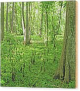 Baton Rouge Blueonnet Swamp  La Wood Print