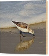 Beach Bird Wood Print