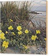 Beach Evening Primrose On Folly Beach - D001782 Wood Print