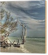 Beach Tree Wood Print