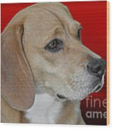 Beagle - A Hound's Hound Wood Print by Christine Till