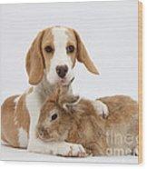 Beagle Pup And Rabbit Wood Print
