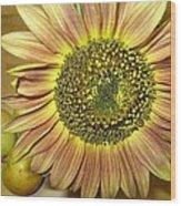 Beaming Sunflower Wood Print