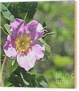 Beaming Wild Rose Wood Print