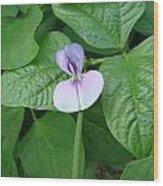 Bean Bloom Wood Print