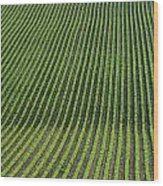 Bean Field, Holland, Manitoba Wood Print