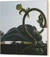 Bean Tendril In The Mist Wood Print