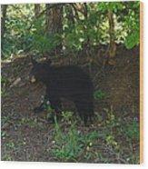 Bear Cub Wood Print