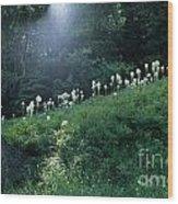 Bear-grass Ridge Wood Print