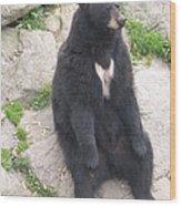 Bear Sitting On A Rock Wood Print