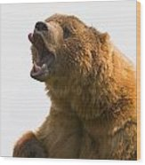 Bear With Tongue Out Of Mouth Wood Print by Carson Ganci