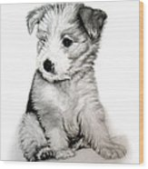 Bearded Collie Pup Wood Print by Michelle Harrington
