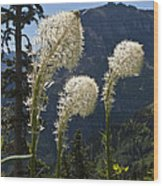 Beargrass Squaw Grass - 4 Wood Print