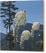 Beargrass Squaw Grass 2 Wood Print