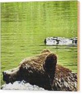 Bearly Swim Wood Print