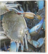 Beaufort Blue Crabs Wood Print