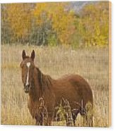 Beautiful Chestnut Horse Wood Print
