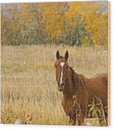 Beautiful Grazing Horse Wood Print