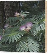 Beautiful Alabama Mimosa Silk Tree Wood Print